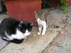 イタリアの猫達です。